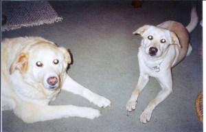 Brandy and Sierra summer 2002 001
