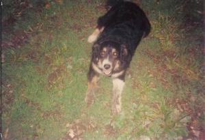 Maybelle 1992 001